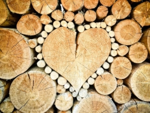 Aktenschrank aus Holz kaufen